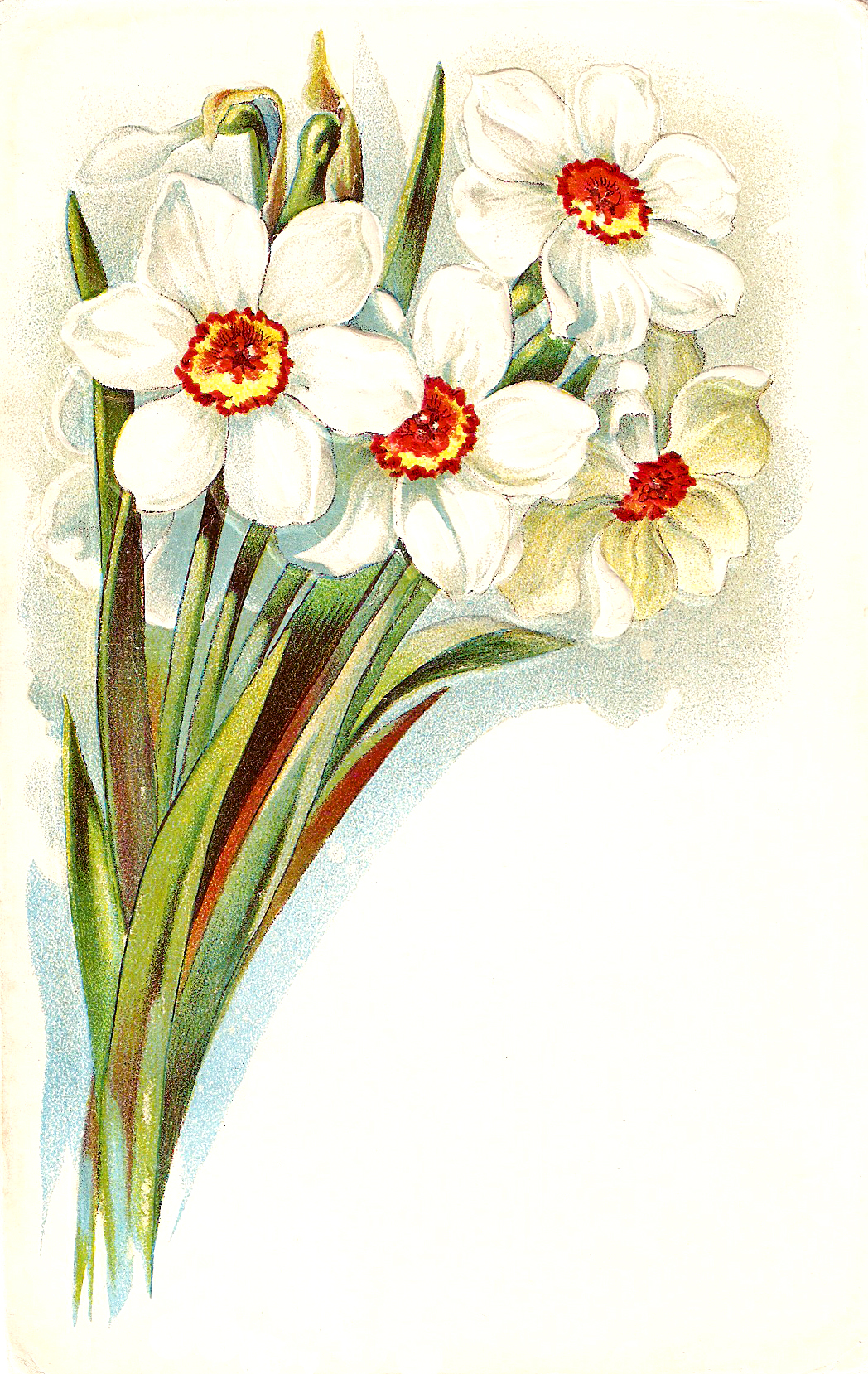 Catnipstudiocollage free vintage clip. Bouquet clipart daffodils