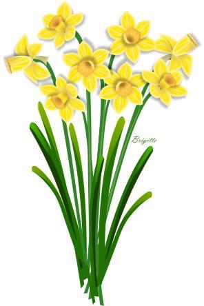By brigitte. Daffodil clipart
