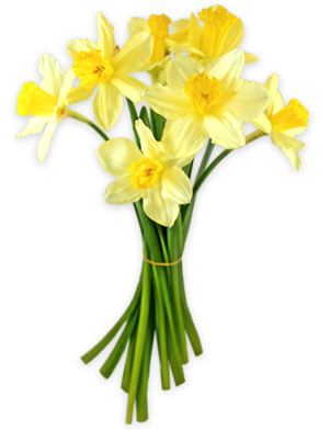 Bouquet clipart daffodils. By lovemayu on deviantart