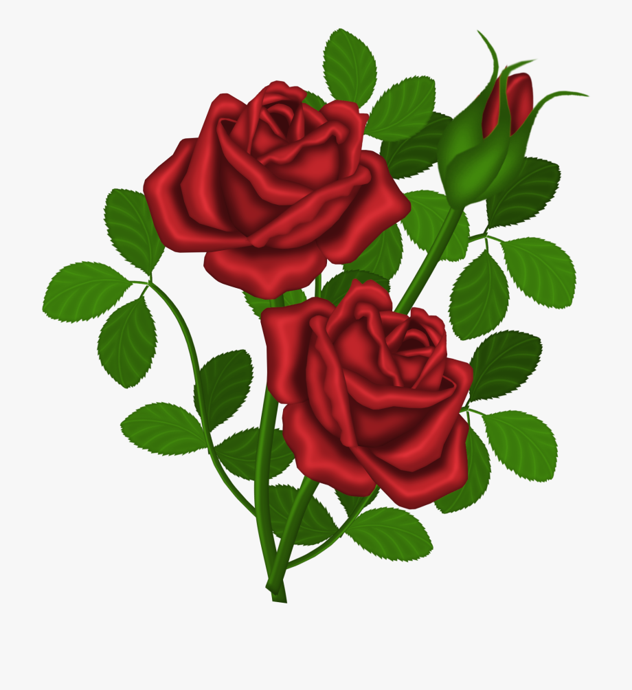 Clipart roses rose bush. Dozen red bouquet clip