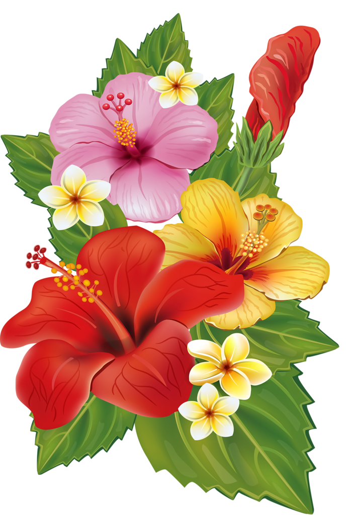 Bouquet clipart hibiscus.  png hawaiian flowers