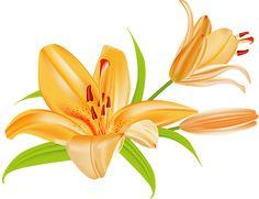 Bouquet clipart summer. Pontiac s rebellion an