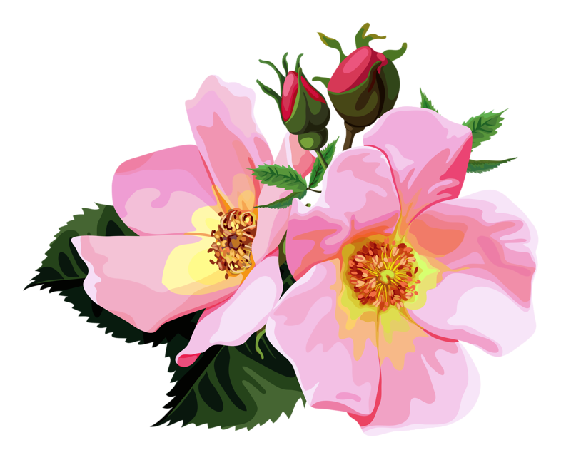 Rose cl part design. Bouquet clipart transparent background