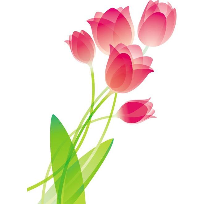 Pink glossy flower vector. Bouquet clipart tulip