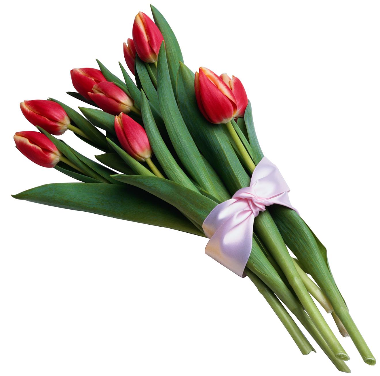 Of red tulips transparent. Bouquet clipart tulip