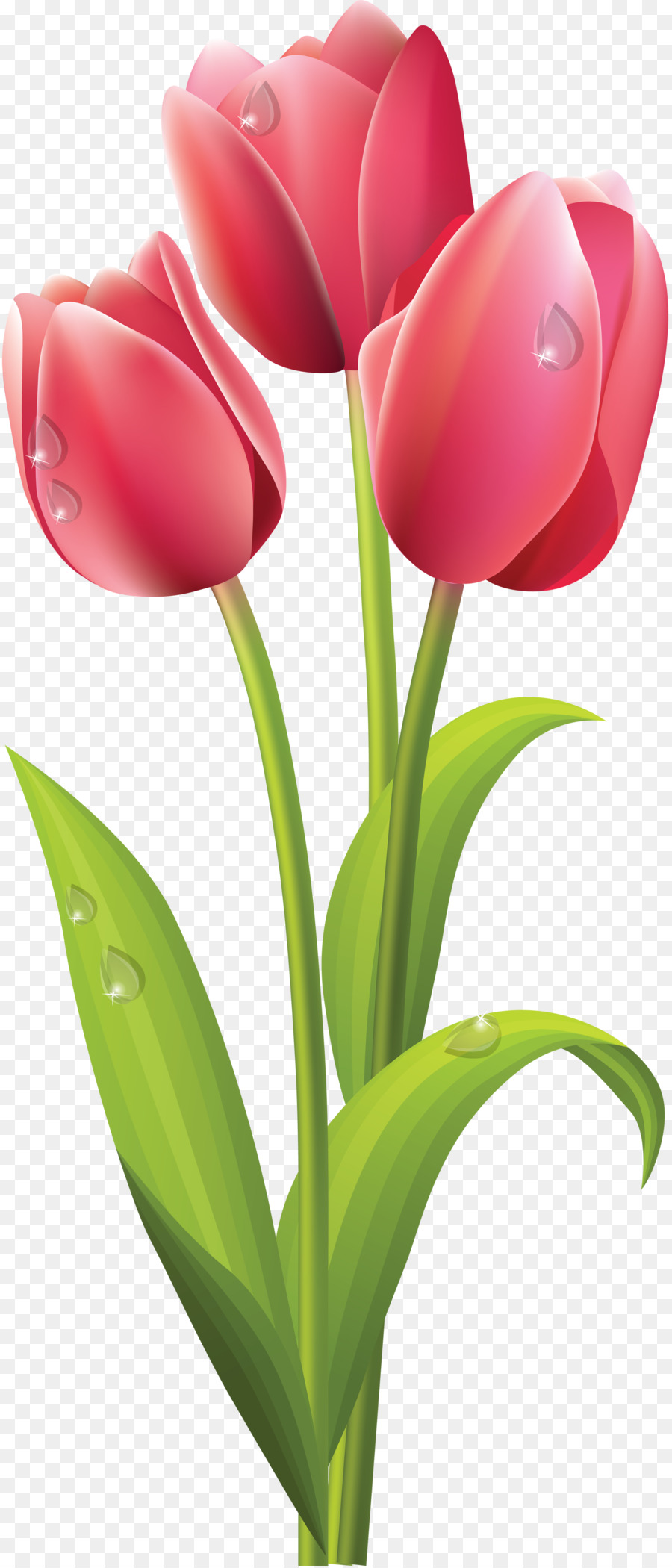 Flower clip art png. Bouquet clipart tulip