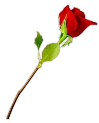 Bouquet clipart valentine. Flowers clip art rose