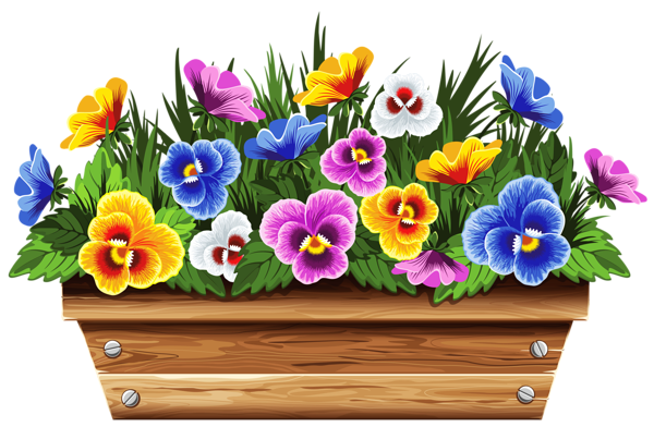 Box clipart flower. With violets png picture