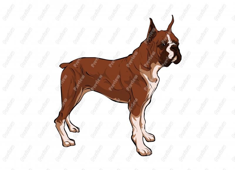 Boxer clipart boxer dog. Realistic character clip art