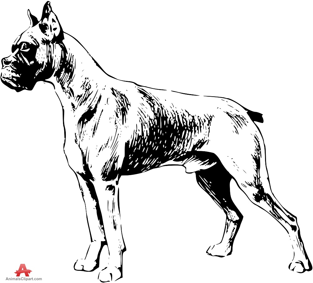 Boxer clipart boxer dog. Drawing free design download