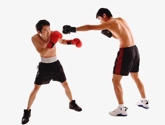 Boxer boxing training