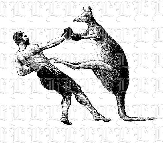 Kangaroo fight printable victorian. Boxer clipart vintage