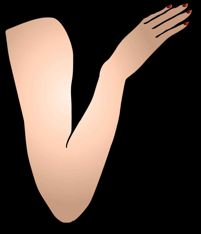 Public domain clip art. Thumb clipart arm