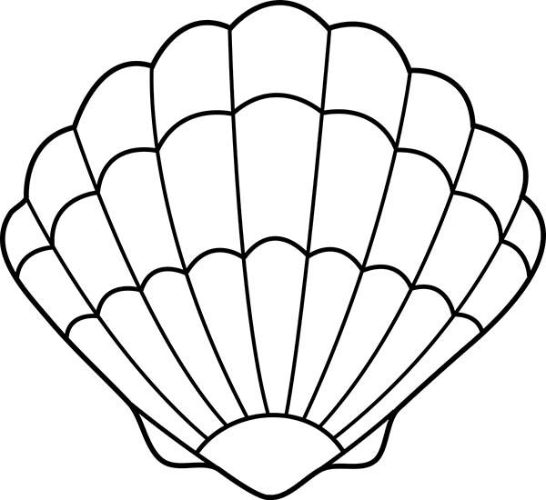 Seashell drawing lovely zigzag. Bra clipart colouring