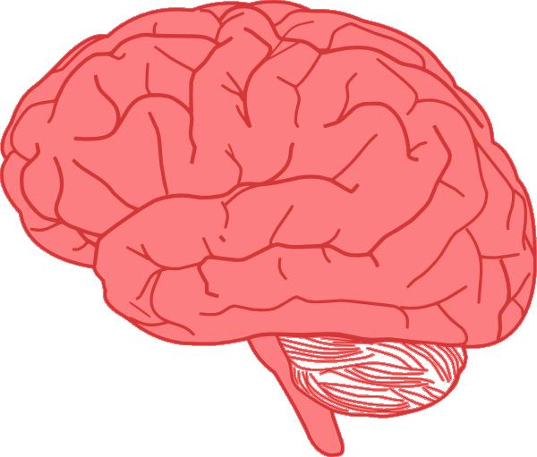 Brain clipart. Clip art at clker