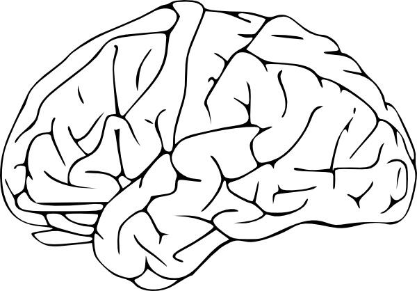 Clip art free vector. Brain clipart