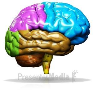 Brain clipart animated. Presenter media powerpoint templates