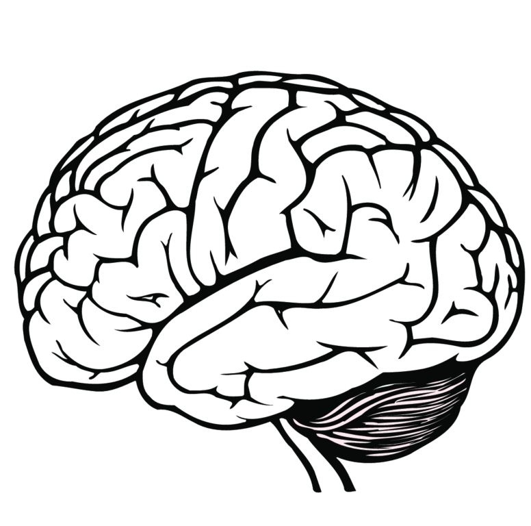 Best of human letter. Brain clipart black and white