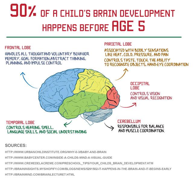 Brain clipart brain development.  ways to promote