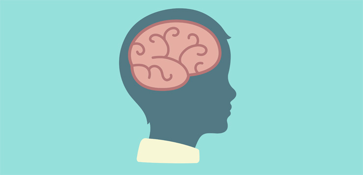 brain clipart brain development