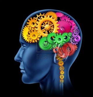 Brain clipart brain development. What is the best