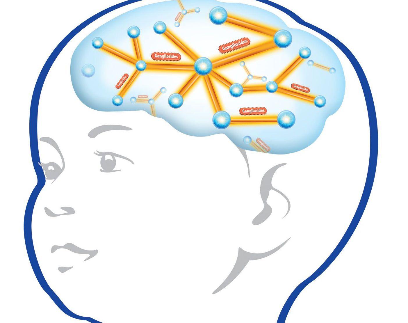 Baby incep imagine ex. Brain clipart brain development