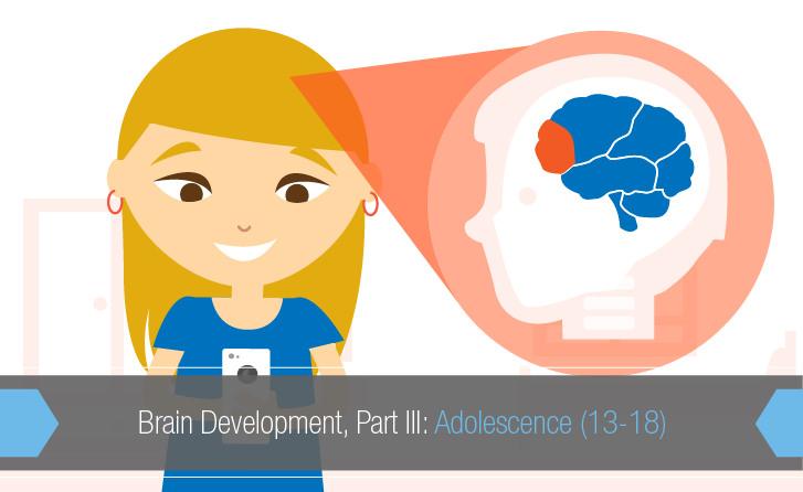 Brain clipart brain development. Part iii adolescence teensafe