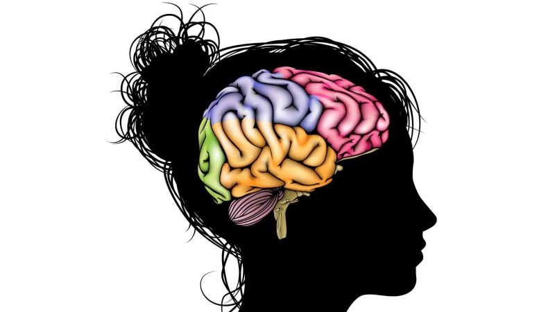 Clipart brain brain development. Harnessing the incredible learning