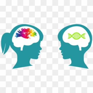 Illustration hd png download. Brain clipart cognitive