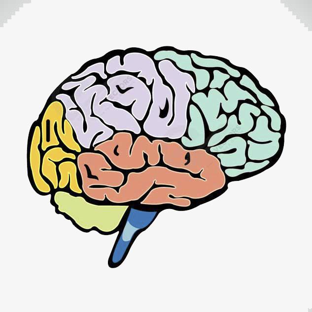 Mind clipart colorful. Colored brain color colour