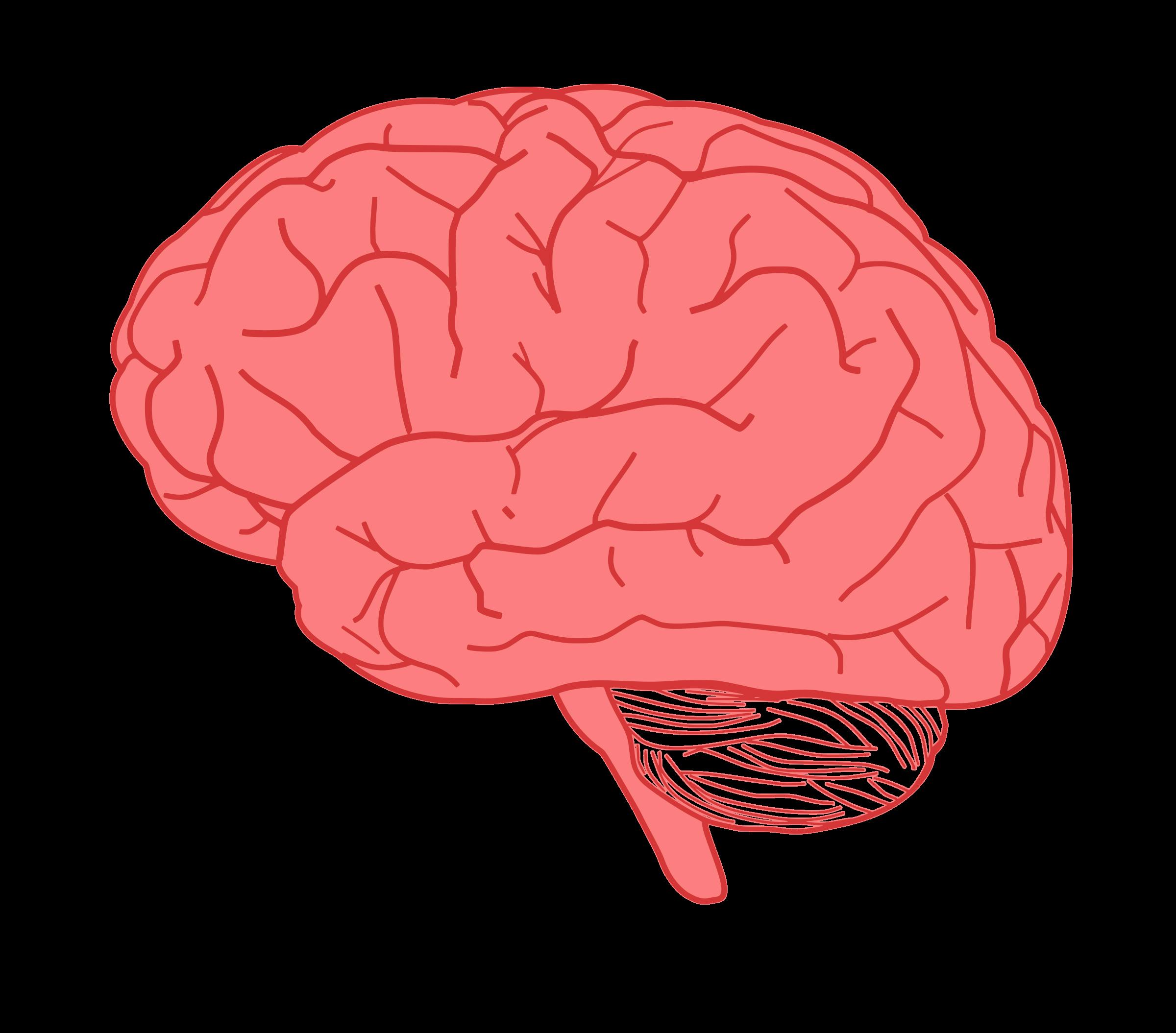 In profile big image. Clipart brain pdf