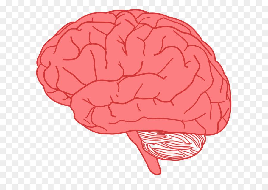 Brain clipart cute. Clip art cliparts png