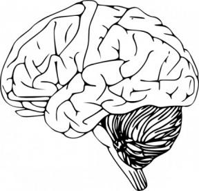 Free use . Brain clipart cute
