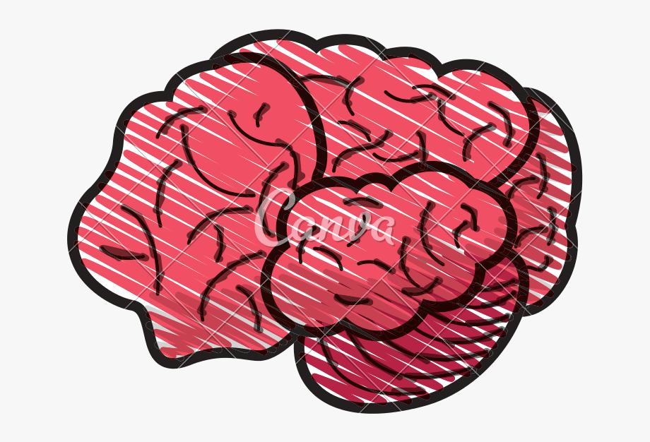 Brain clipart doodle. Human dibujo cerebro humano