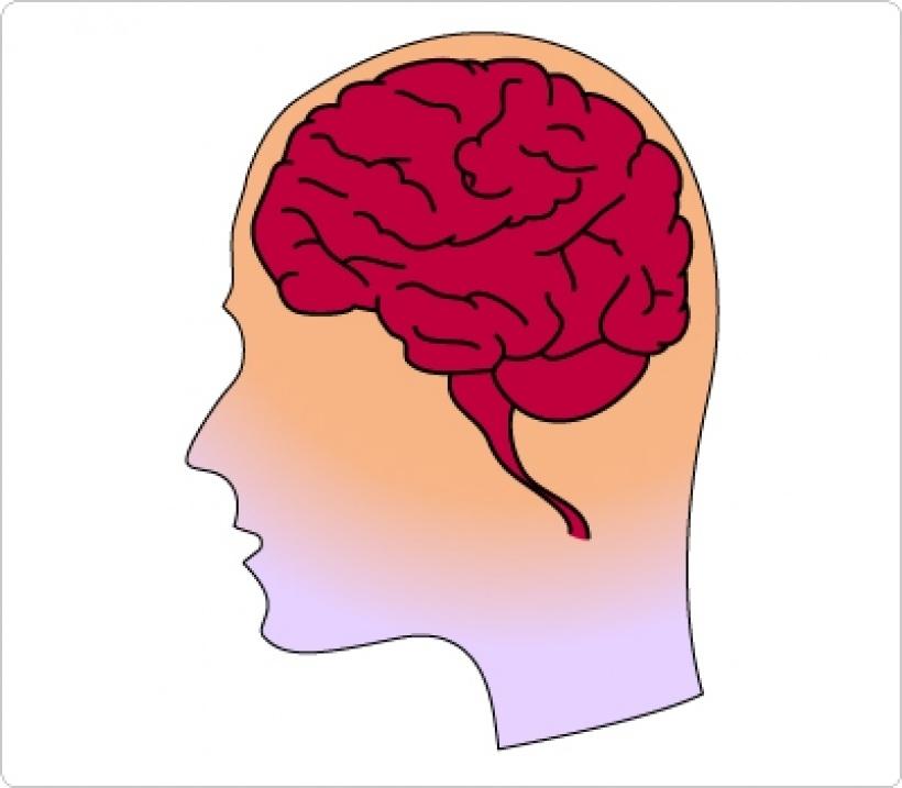 Brain clipart human brain. Unique of letter master