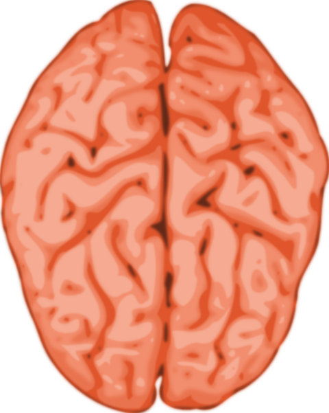 Brain clipart human brain. Clip art at clker