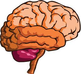 Clipart brain nerve system. Human clip art bay