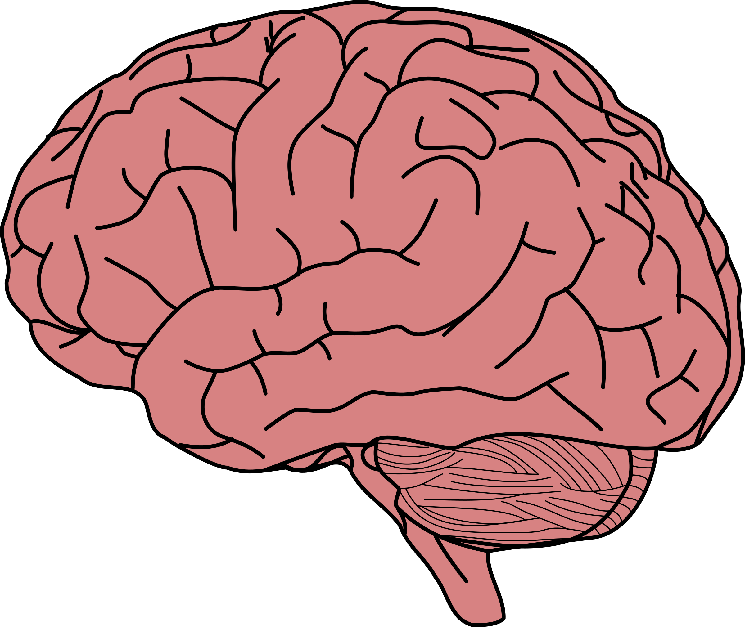 Thoughts clipart brain. Human big image png