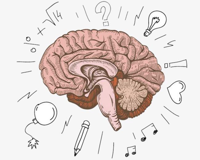 Development color hand painted. Brain clipart imagination