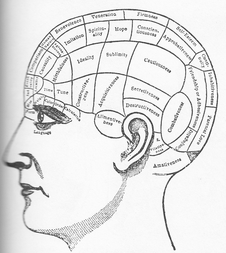 Brain clipart intelligence. In the flesh an