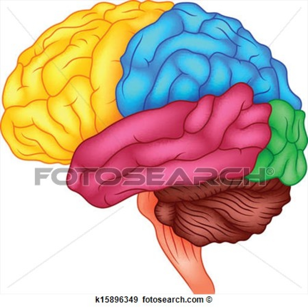 Free download best on. Brain clipart intelligence