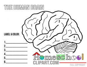 Cosy parts of the. Brain clipart label