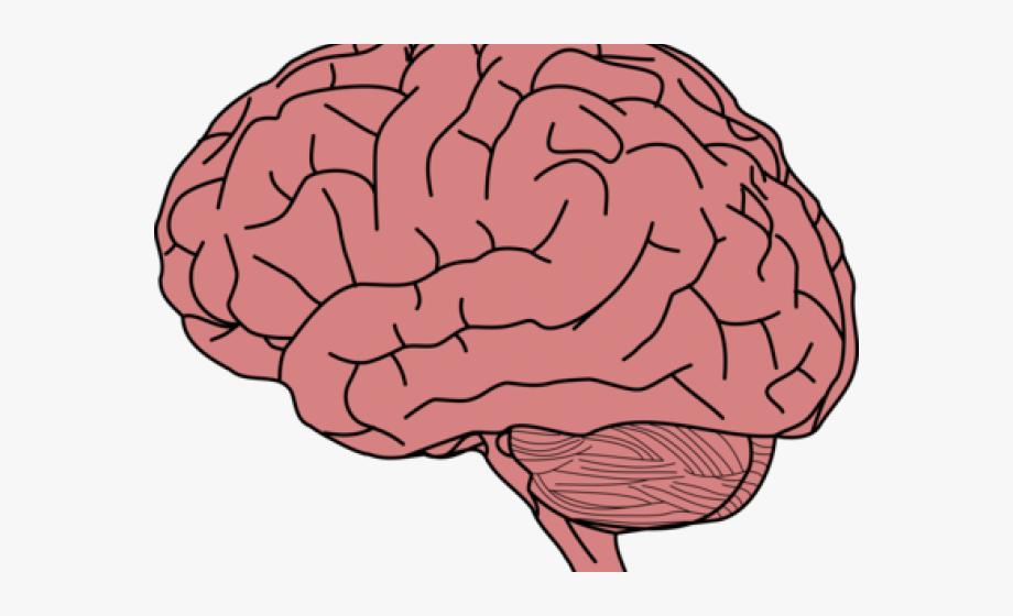Brain clipart label. Image transparent background
