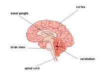 Search results for clip. Brain clipart label
