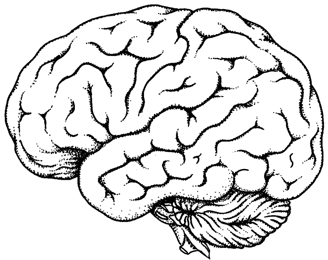 Brain clipart line art. Drawing clip library