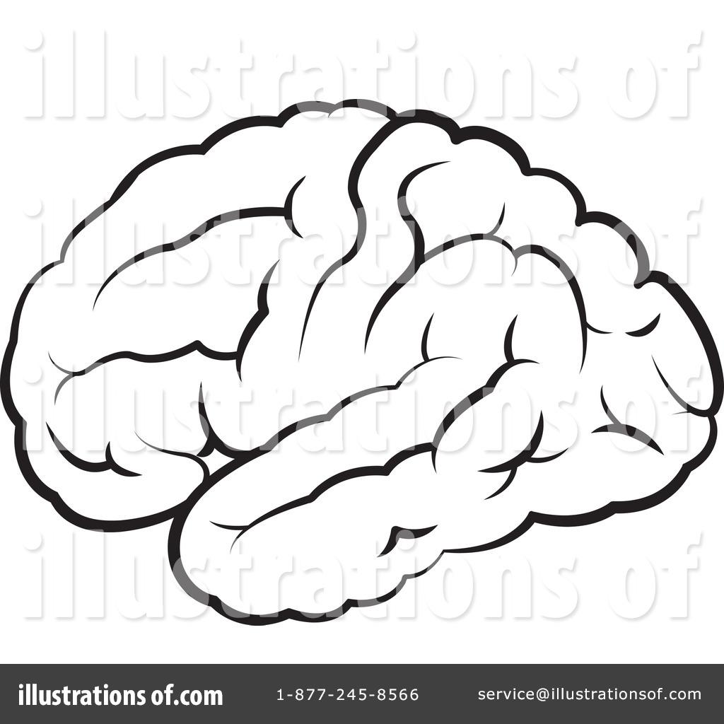 Brain clipart line art. Illustration by lal perera