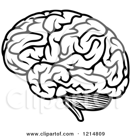 Drawing at getdrawings com. Brain clipart line art