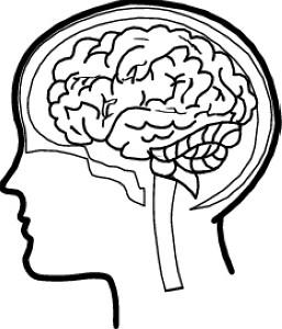 Free cliparts download clip. Brain clipart line art