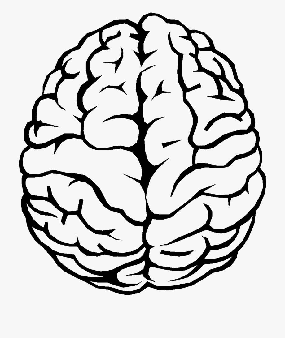 Brain clipart line art. Outline transparent free cliparts