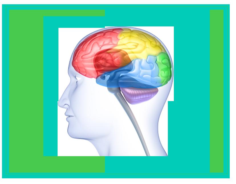 Neuroscience panda free images. Clipart brain emotion